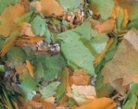 Superfood Wurm- und Insektenfutter 1000g