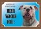 Warnschild American Bulldogge