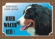Warnschild Berner Sennenhund