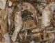 Garnelen vollfleischig, getrocknet, 1000 gr. Beutel