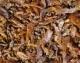 Garnelen indisch, getrocknet, 1000 gr. Beutel