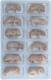 gefrorene Babymaus, 2-3g, 12er Blister
