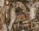 Garnelen vollfleischig, getrocknet, 5000 gr. Beutel