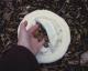 Flybee, klein, 15cm Durchmesser