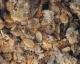 Fettmischung II grob, 5000gr. Beutel