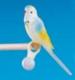 Vogel für Sitzstange